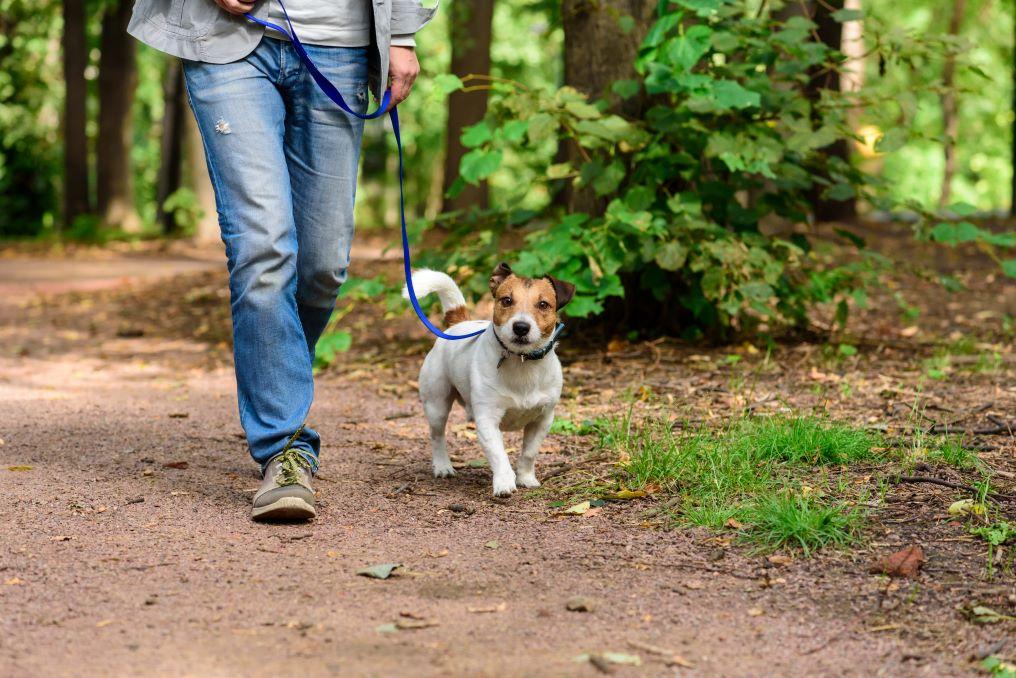 Best Dog-Friendly Trails in Hocking Hills